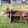 Agility ARC Nationals May 14 2017MelissaFaithKnightFaithPhotographyNV_4062