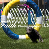 Agility ARC Nationals May 14 2017MelissaFaithKnightFaithPhotographyNV_4023