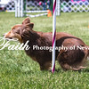 Agility ARC Nationals May 14 2017MelissaFaithKnightFaithPhotographyNV_4061