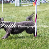 Agility ARC Nationals May 14 2017MelissaFaithKnightFaithPhotographyNV_4038