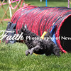 Agility ARC Nationals May 14 2017MelissaFaithKnightFaithPhotographyNV_4025