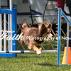 Agility ARC Nationals May 14 2017MelissaFaithKnightFaithPhotographyNV_4050