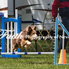 Agility ARC Nationals May 14 2017MelissaFaithKnightFaithPhotographyNV_4051