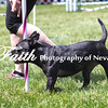 Agility ARC Nationals May 14 2017MelissaFaithKnightFaithPhotographyNV_4136