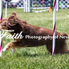 Agility ARC Nationals May 14 2017MelissaFaithKnightFaithPhotographyNV_4064