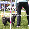 Agility ARC Nationals May 14 2017MelissaFaithKnightFaithPhotographyNV_4033