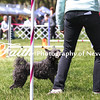 Agility ARC Nationals May 14 2017MelissaFaithKnightFaithPhotographyNV_4034