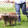 Agility ARC Nationals May 14 2017MelissaFaithKnightFaithPhotographyNV_4057