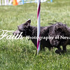 Agility ARC Nationals May 14 2017MelissaFaithKnightFaithPhotographyNV_4035