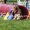 Agility ARC Nationals May 14 2017MelissaFaithKnightFaithPhotographyNV_4054