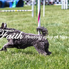Agility ARC Nationals May 14 2017MelissaFaithKnightFaithPhotographyNV_4037