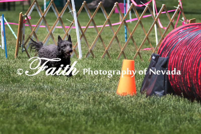 Agility ARC Nationals May 14 2017MelissaFaithKnightFaithPhotographyNV_4021