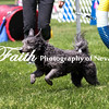Agility ARC Nationals May 14 2017MelissaFaithKnightFaithPhotographyNV_4029