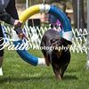 Agility ARC Nationals May 14 2017MelissaFaithKnightFaithPhotographyNV_4197
