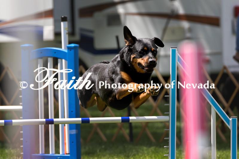 Agility ARC Nationals May 14 2017MelissaFaithKnightFaithPhotographyNV_4373