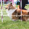 Agility ARC Nationals May 14 2017MelissaFaithKnightFaithPhotographyNV_4746