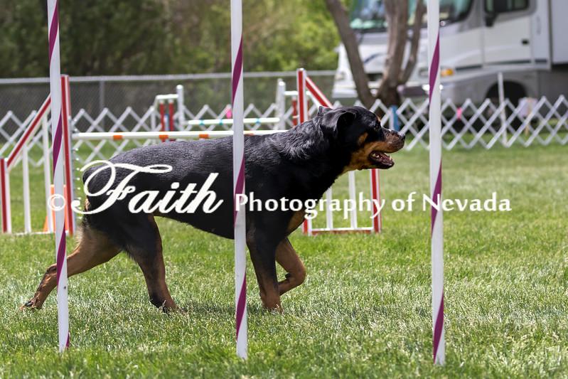 Agility ARC Nationals May 14 2017MelissaFaithKnightFaithPhotographyNV_1885