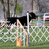 Agility ARC Nationals May 14 2017MelissaFaithKnightFaithPhotographyNV_3545
