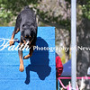 Agility ARC Nationals May 14 2017MelissaFaithKnightFaithPhotographyNV_3549