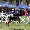 Agility ARC Nationals May 14 2017MelissaFaithKnightFaithPhotographyNV_3606