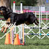 Agility ARC Nationals May 14 2017MelissaFaithKnightFaithPhotographyNV_3579