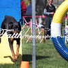 Agility ARC Nationals May 14 2017MelissaFaithKnightFaithPhotographyNV_3548