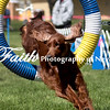 Agility ARC Nationals May 14 2017MelissaFaithKnightFaithPhotographyNV_3764