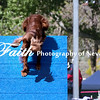 Agility ARC Nationals May 14 2017MelissaFaithKnightFaithPhotographyNV_3767
