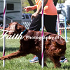 Agility ARC Nationals May 14 2017MelissaFaithKnightFaithPhotographyNV_3778