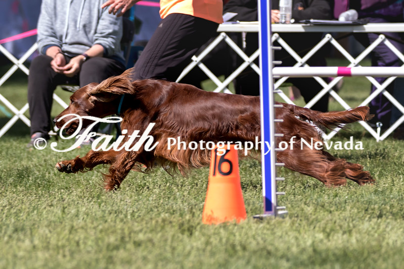 Agility ARC Nationals May 14 2017MelissaFaithKnightFaithPhotographyNV_3761