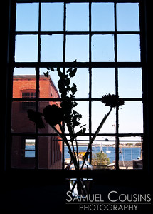 Flowers in front of a window at the Portland Company.