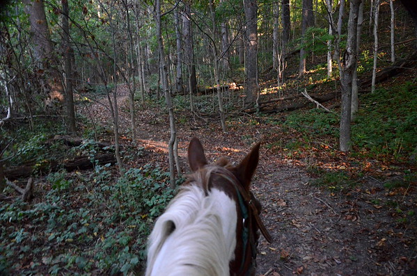 View from on horseback.