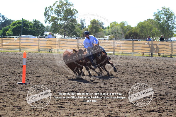 ARBC CAMPDRAFT DAY THREE PART TWO