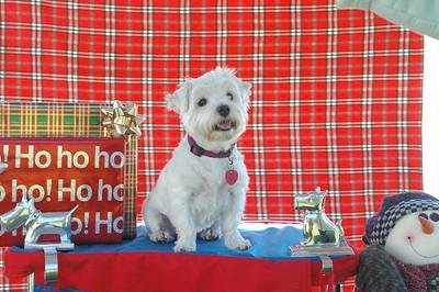 ATCWW Responsible Dog Owner