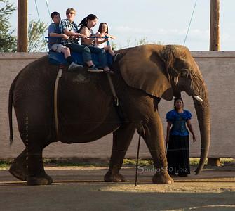 Elephant ride 8686