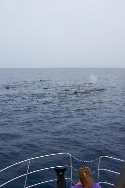 Tara, Carrie, Sperm Whales