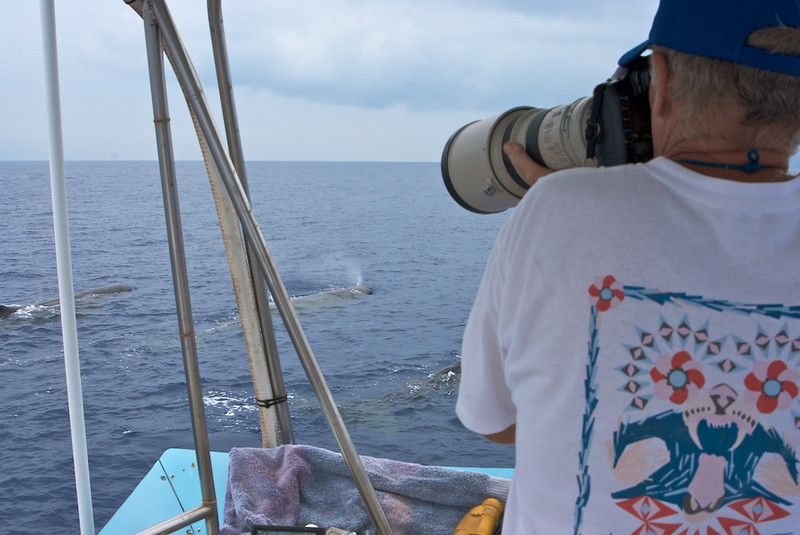 Dan, photographing Sperm Whales