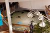 Sting-rays swimming in the aquarium