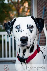 Adopt A Spot - Deputy 13
