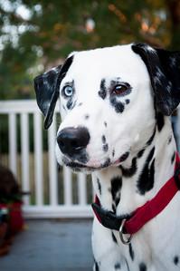 Adopt A Spot - Deputy 11