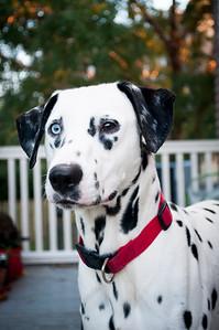 Adopt A Spot - Deputy 12