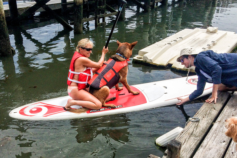 Paddle Board Pooch
