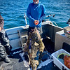 """Dave Nesthus with 67"""" 155# Halibut"""