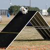 13 12-15 Agility dogs 2852
