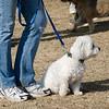 13 12-15 Agility dogs 2857