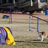 13 12-15 Agility dogs 2867