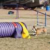 13 12-15 Agility dogs 2861