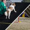 13 12-15 Agility dogs 2866