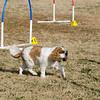 13 12-15 Agility dogs 2865
