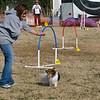 13 12-15 Agility dogs 2849